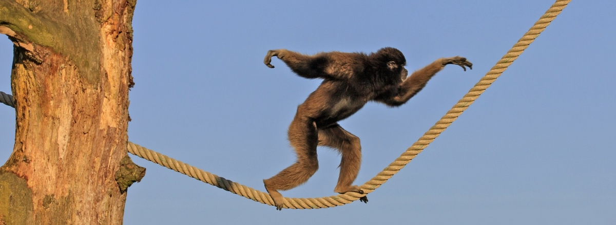 Code Monkey Takin' Off On Tangents